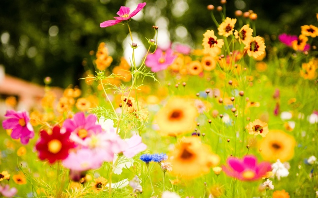 Vivid-Flowers-HD-Wallpaper